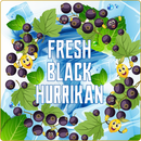 Fresh Black Hurrikan