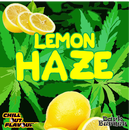Lemon Haze Aroma 10ml -ChillOut-